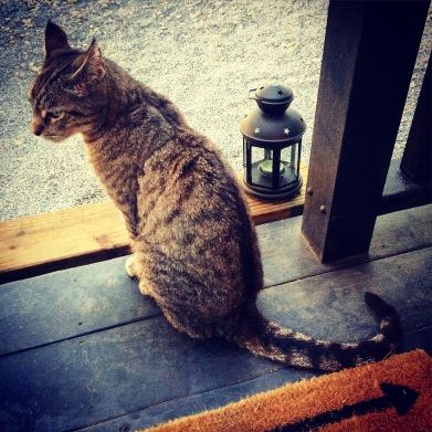 Rumi on the porch.